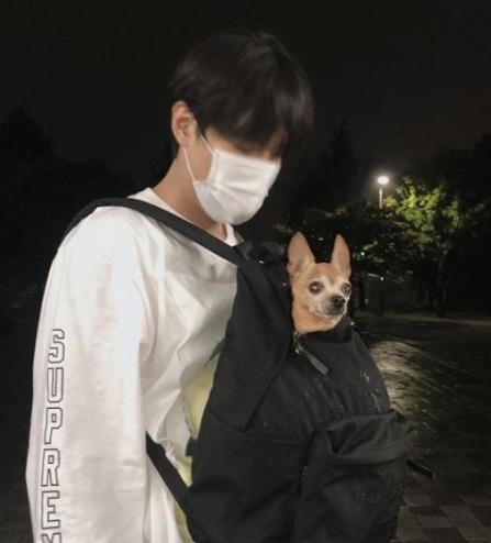 What happened while walking with LEE KNOW's dog?